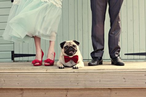You Totally Forgot To Get Your Pet A Gift Didn T Celebrate We Ve Rounded Up Some Of The Absolutely Most Adorable Photos Pets At Weddings