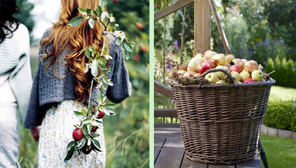 What To Exasperate To Go Apple Picking