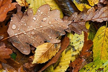 how to get rid of wet leaves