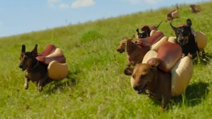 VIDEO: Heinz Just Released The Cutest Commercial For Super Bowl 50...Ever