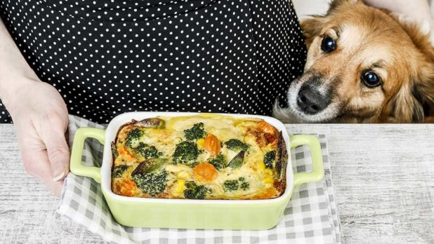 These Popular Thanksgiving Foods Are Actually Toxic To Your Pet (Don't Feed Them Table Scraps!)