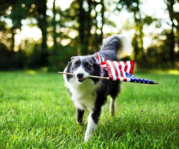 Dog with flag