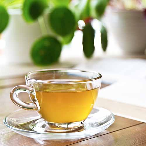 The One Fat Burning Tea Experts Swear By To Lose Weight Fast Shefinds