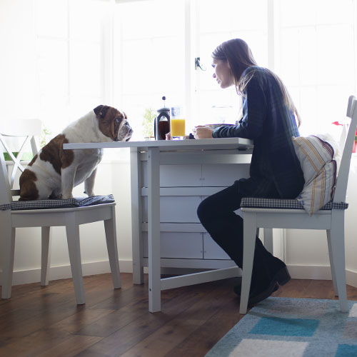 A woman eating breakfast with her dog.
