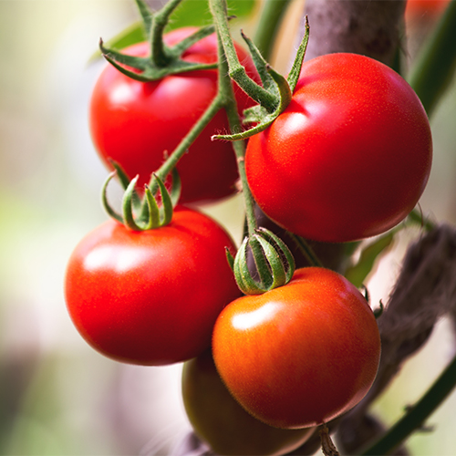 tomatoes best anti inflammatory vegetables for weight loss